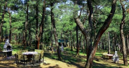 Bursa atatürk kent ormanı piknik alanı