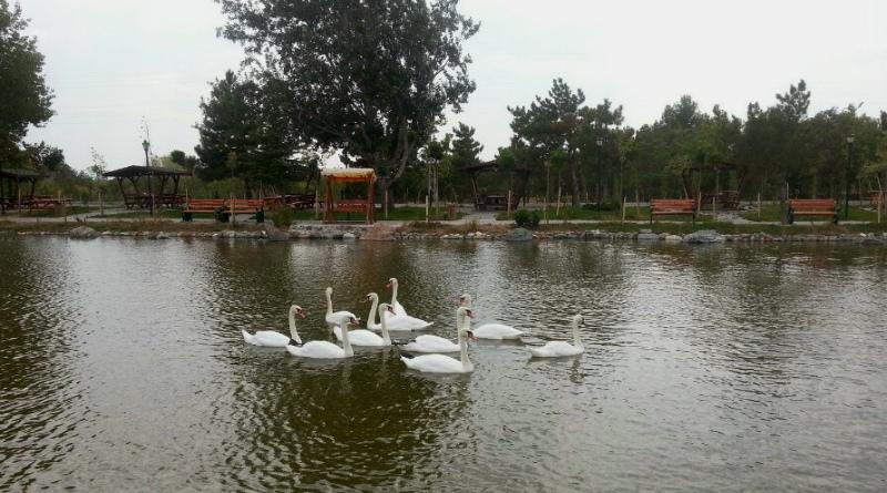 Yedikugular kus cenneti göl