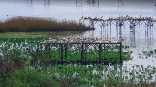 Bandırma Kuş Cenneti Milli Park