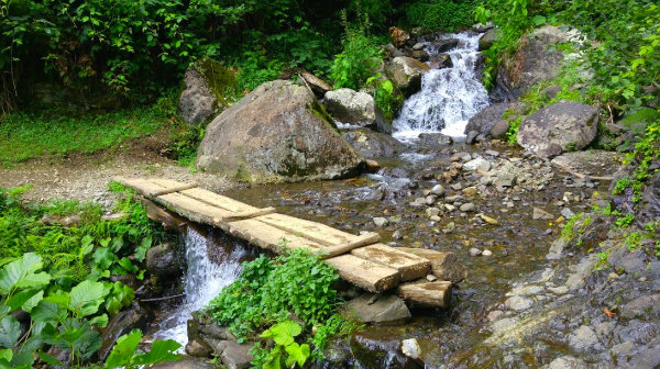 Maral Şelalesi Ağaç Köprü