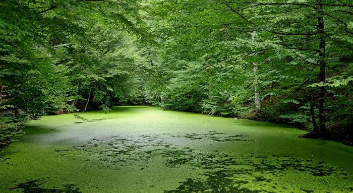 Yedigöller Milli Parkı ( Seringöl )