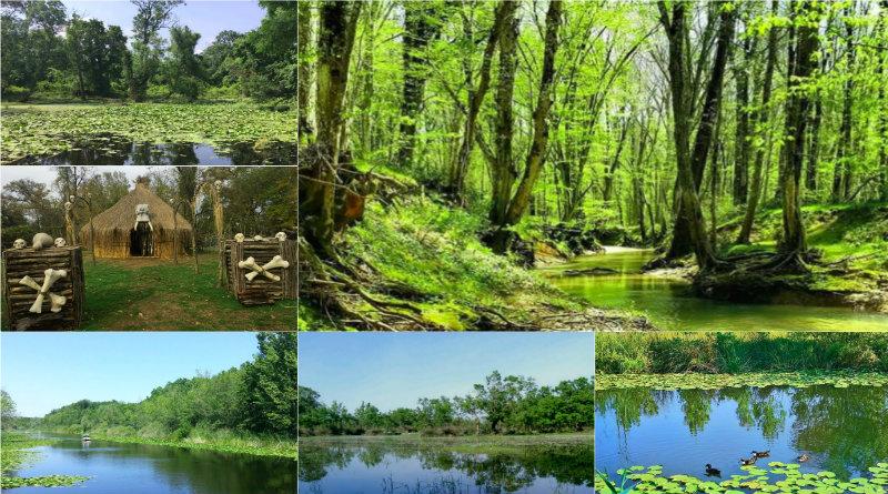 türkiyedeki longoz ormanları nereler