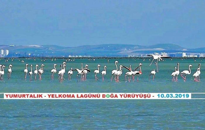 Yumurtalık Eşemen Gölü-Yelkoma Lagünü