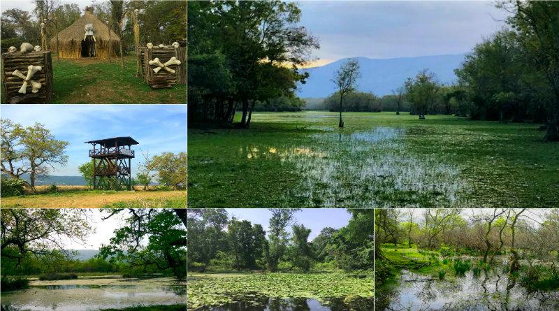 Karacabey Longoz Ormanları