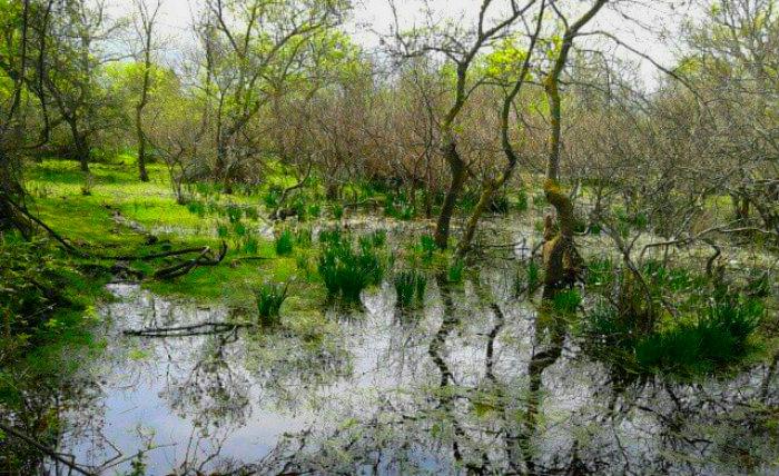 Karacabey Longoz Ormanı
